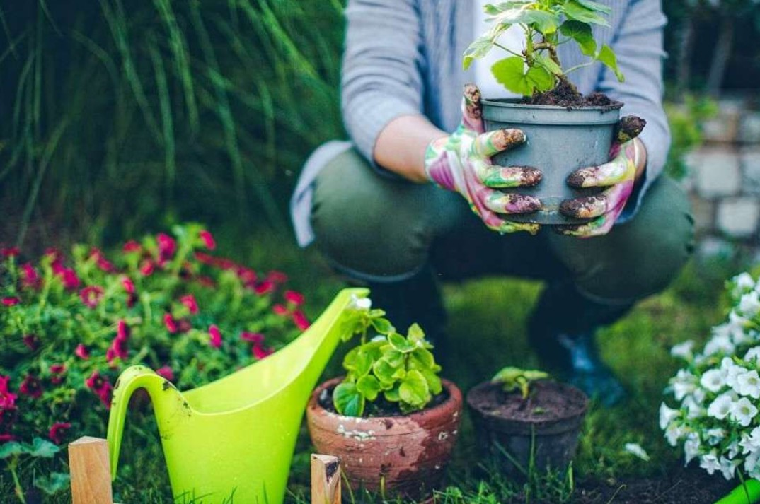 How Gardening Gloves Are Used