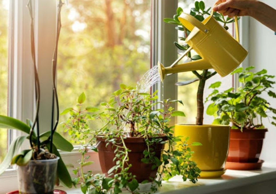 How To Choose A Good Watering Can